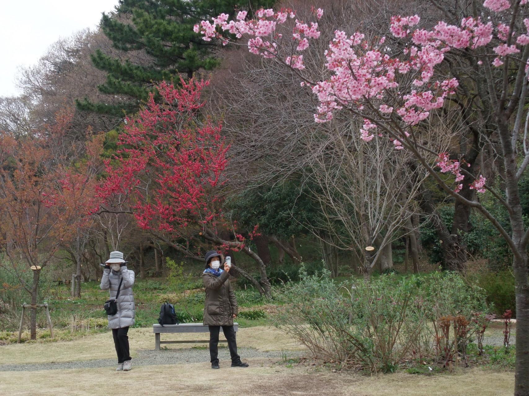 庭園内の花々