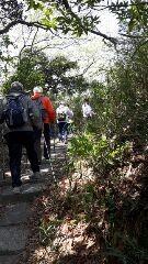 鎌倉山へ山道をノルデックですいすい登る