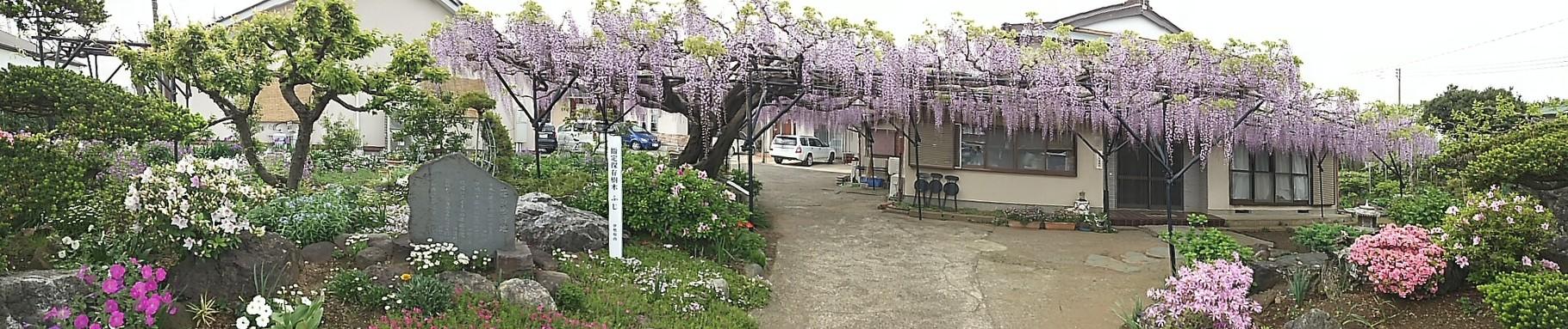 ジェラートで有名な石田牧場手前の藤棚