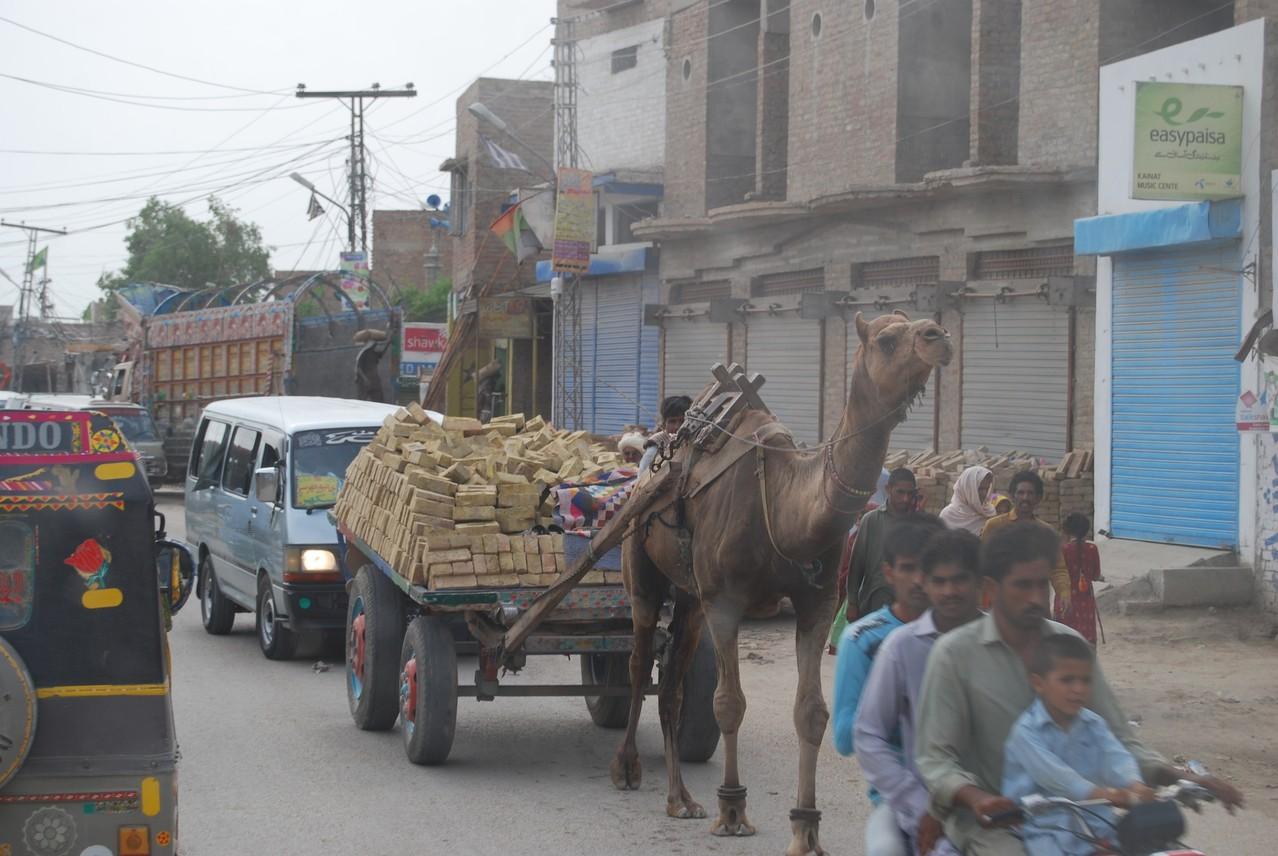 Kamelkutsche auf der Autobahn