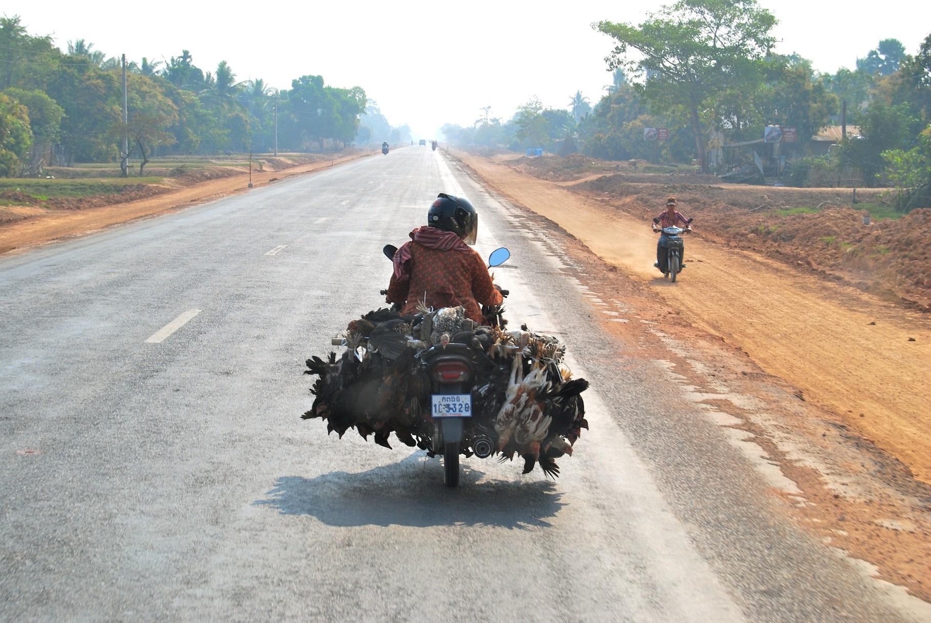 Hühnertransporter á la Kambodscha