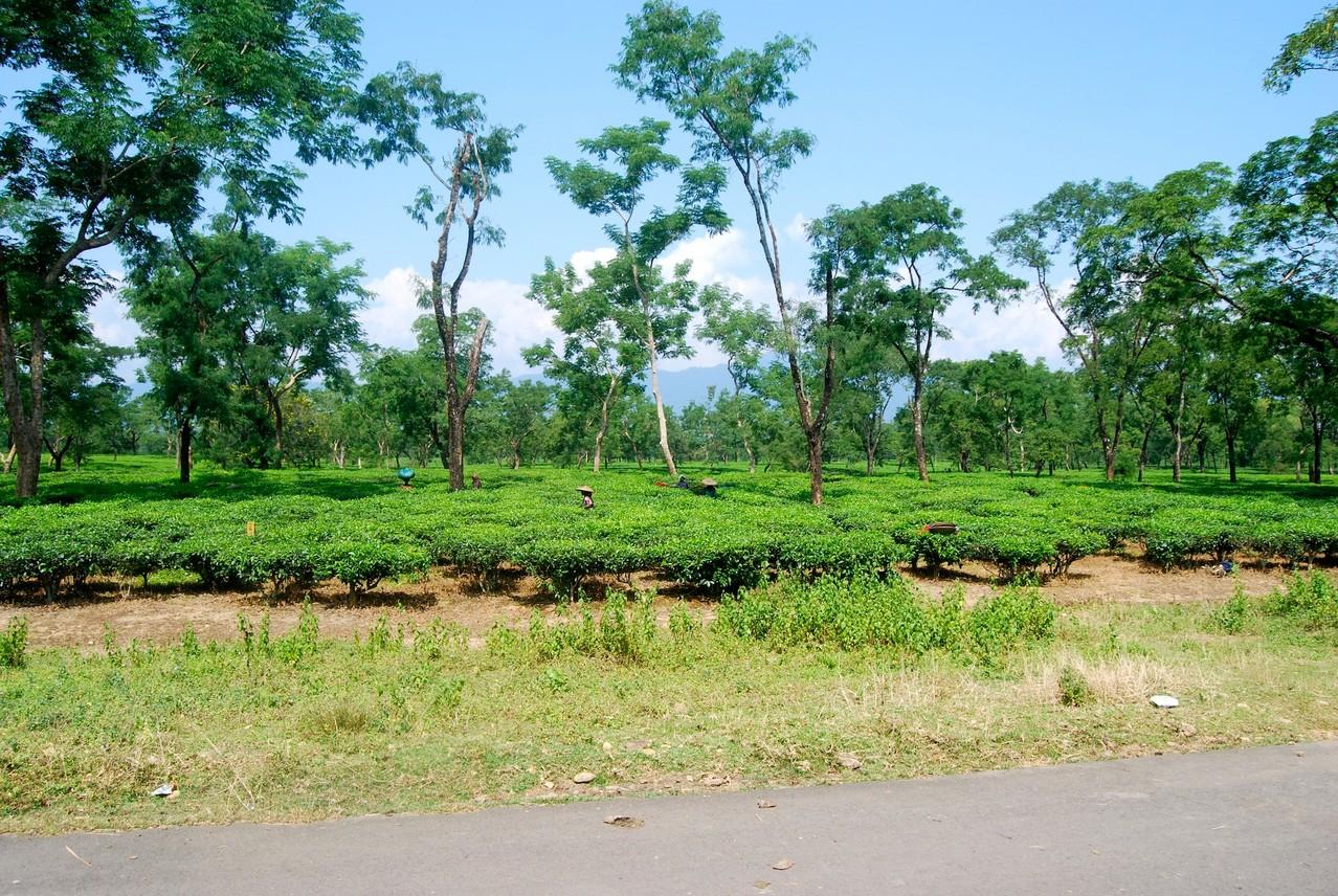 Nordost Indien