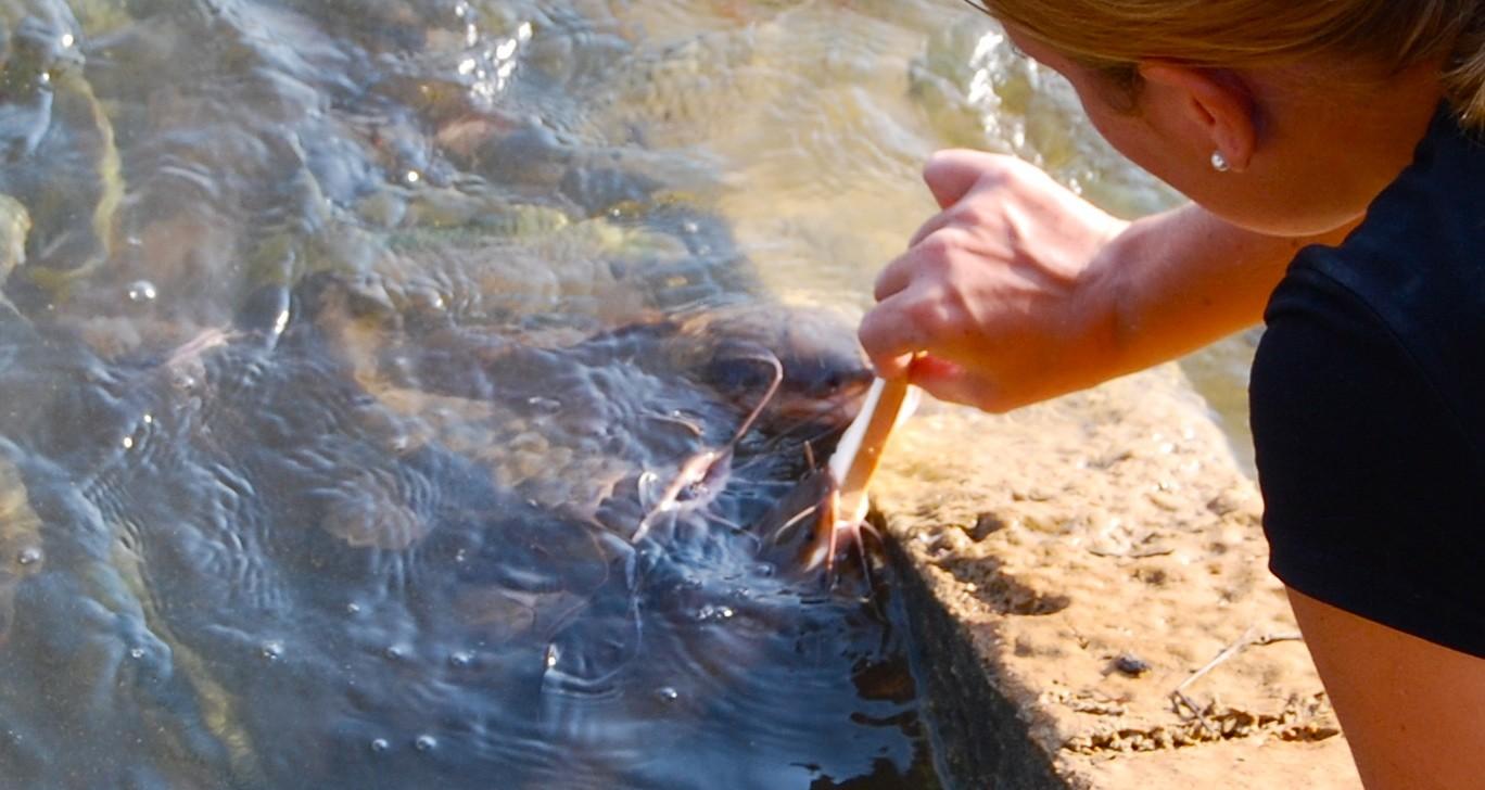 Fische füttern