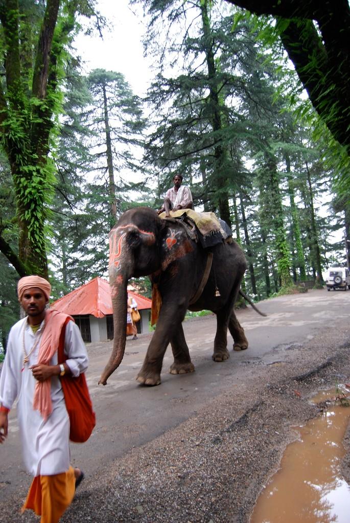 Elephanten am Morgen vertreiben Kummer und Sorgen