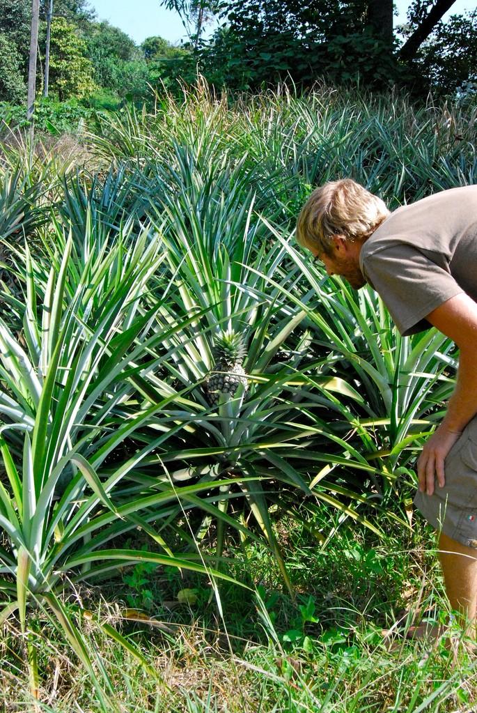 David auf der Suche nach der Ananas