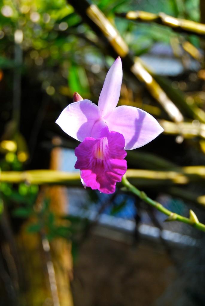 Rom Klao Botanical Garden