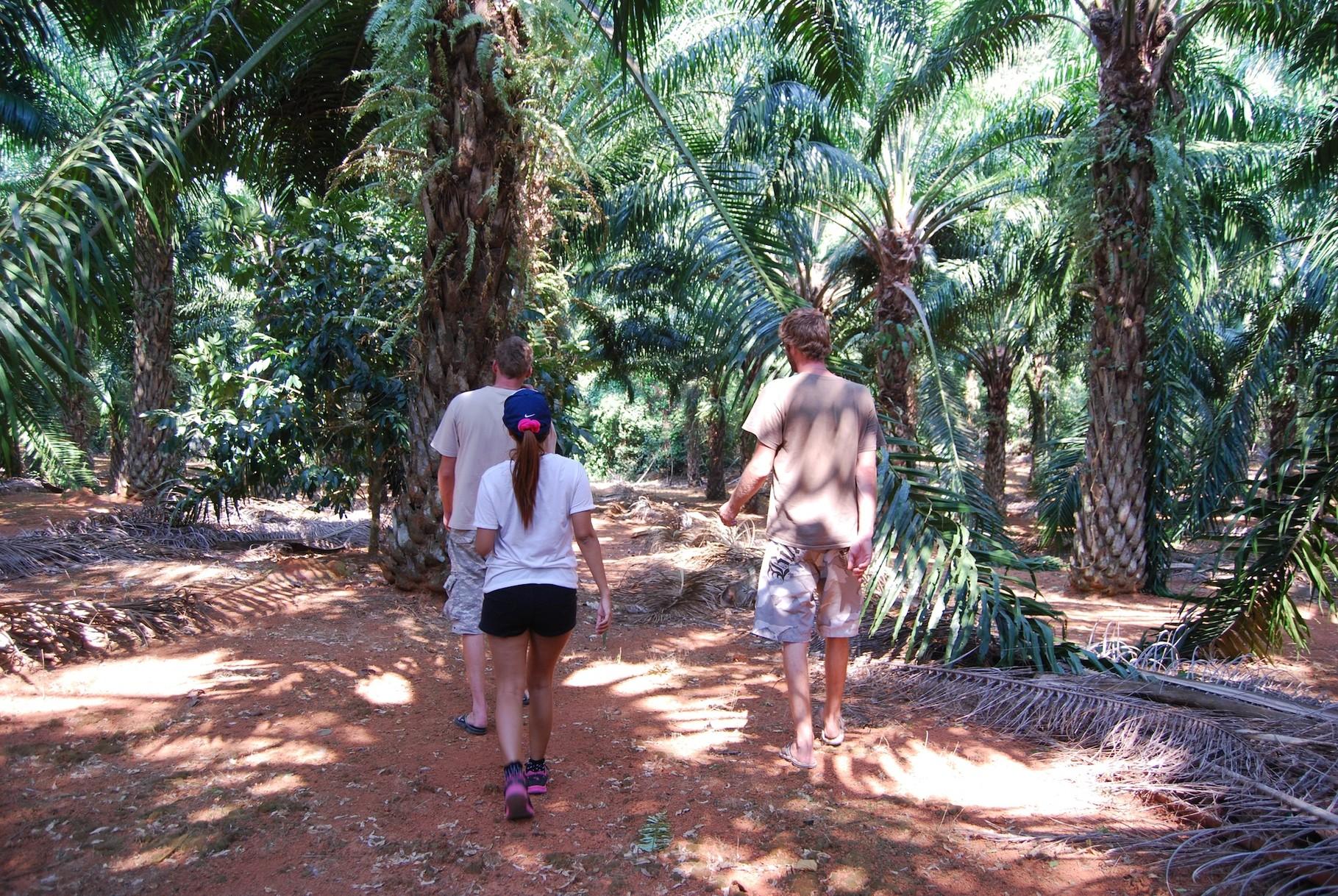 Weg durch die Palmölplantage