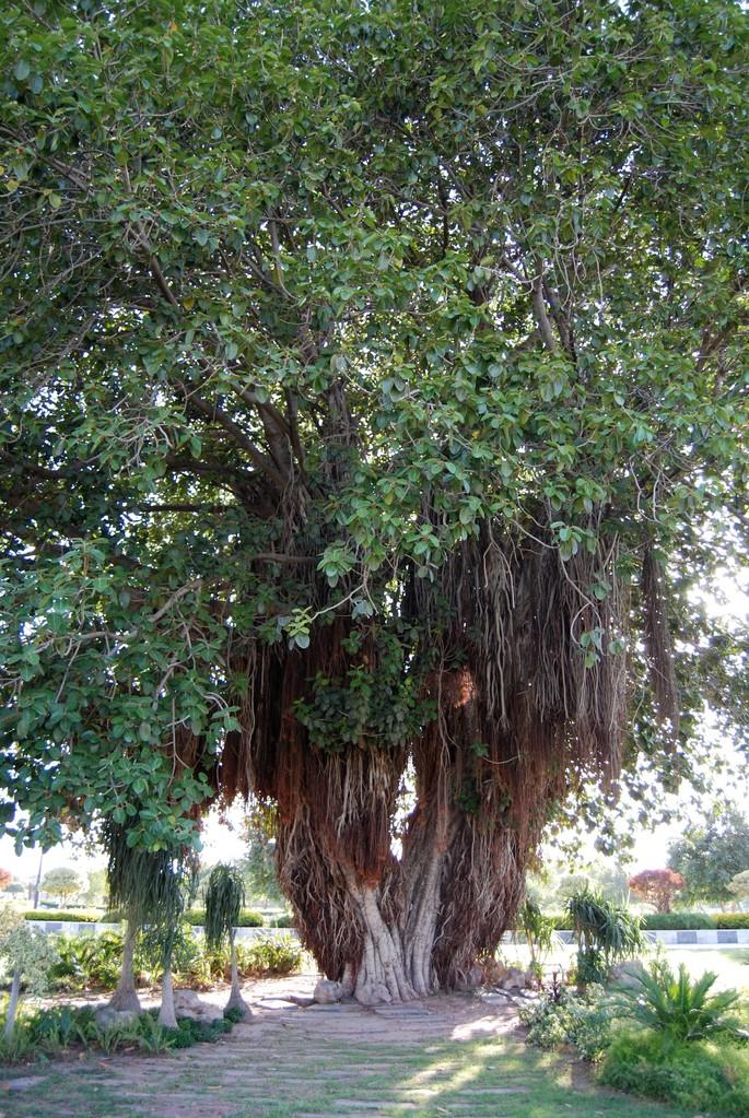 Jinnah Park, Murree