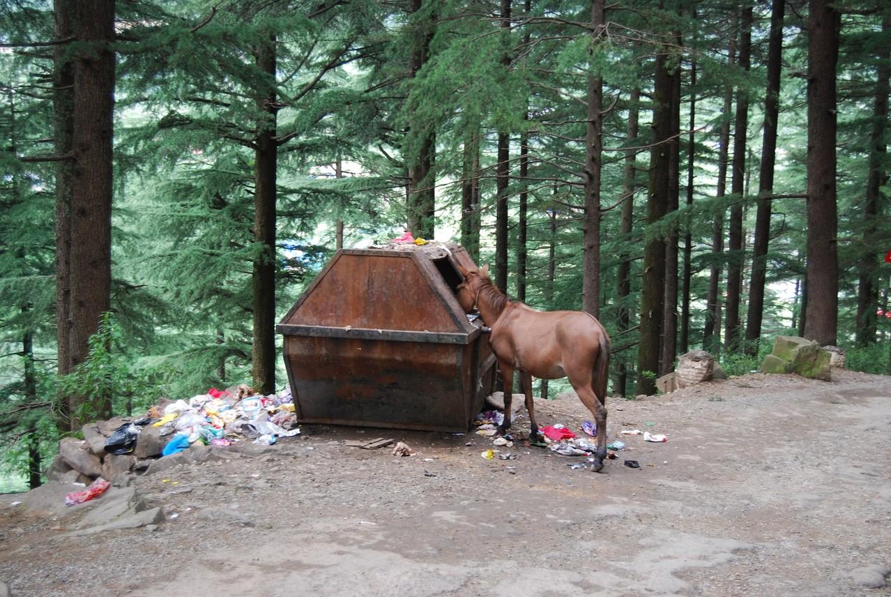 Ein Pferd ohne Manieren