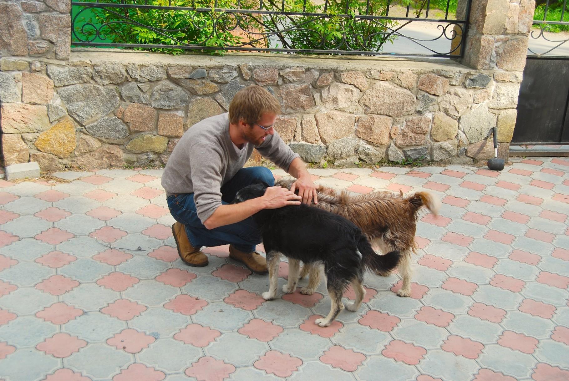 David und die zwei Hunde