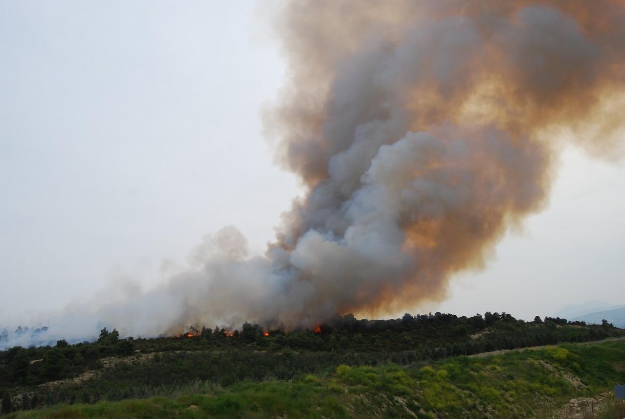 Waldbrand neben der Autobahn