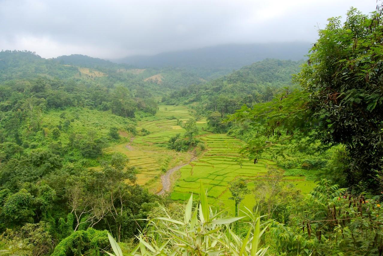 Blick in den Dschungel