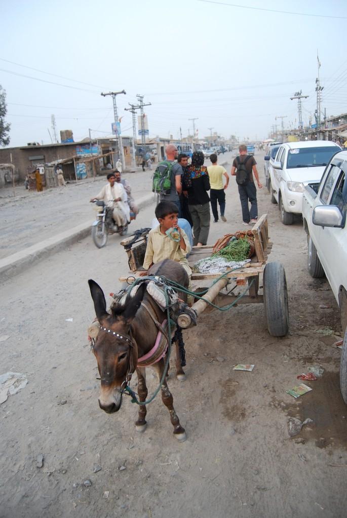 Also die Esel in Pakistan sind wirklich schön