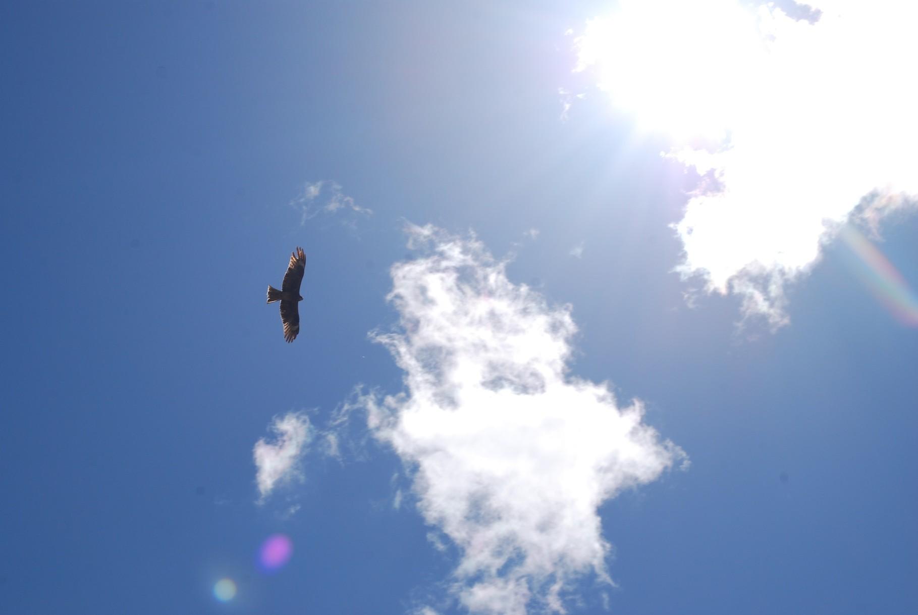 Ein weiterer Raubvogel
