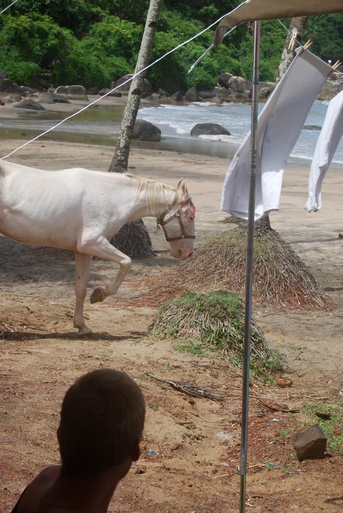 Pferde am Morgen vertreiben Kummer und Sorgen