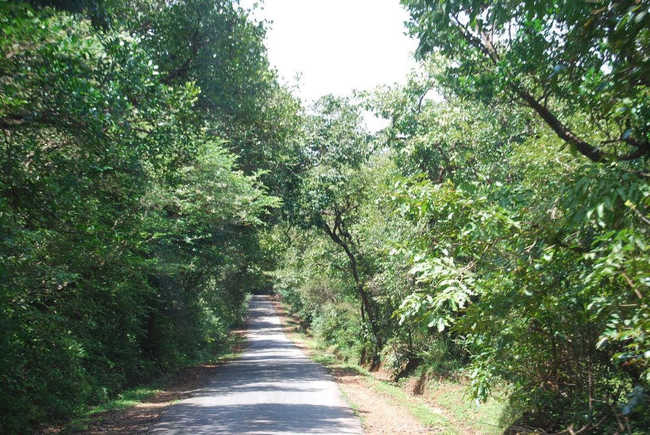 Dschungel-Buch-Straße