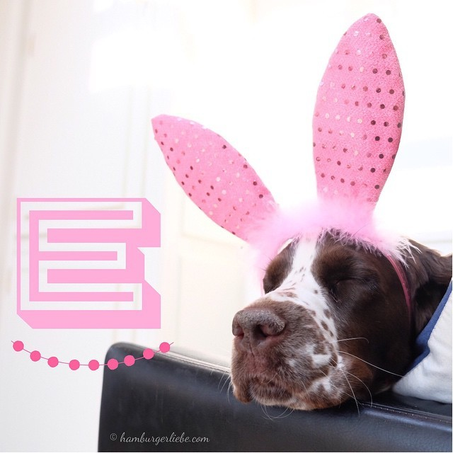 E wie Easter Bunny Edition (sleepy one)