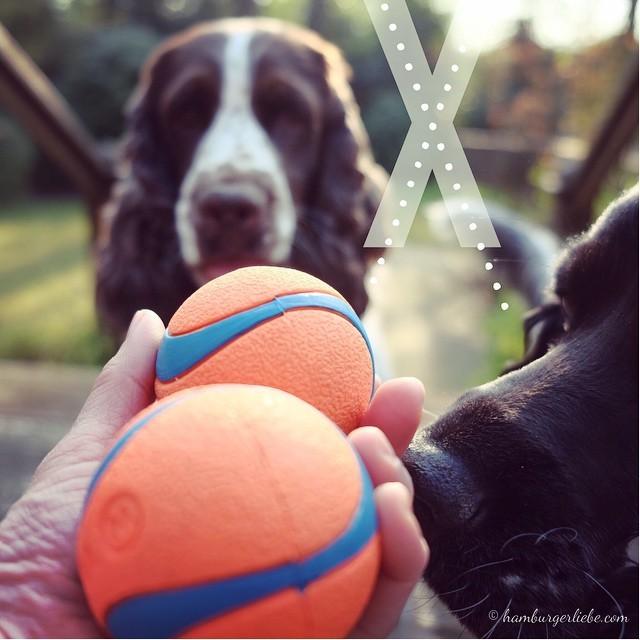 X wie x-mal den Ball werfen und sie werden niemals, niemals müde. Peppa hat erst ganz neu den Spaß am Apportieren entdeckt, Polly dagegen ist der absolute Apportierjunkie