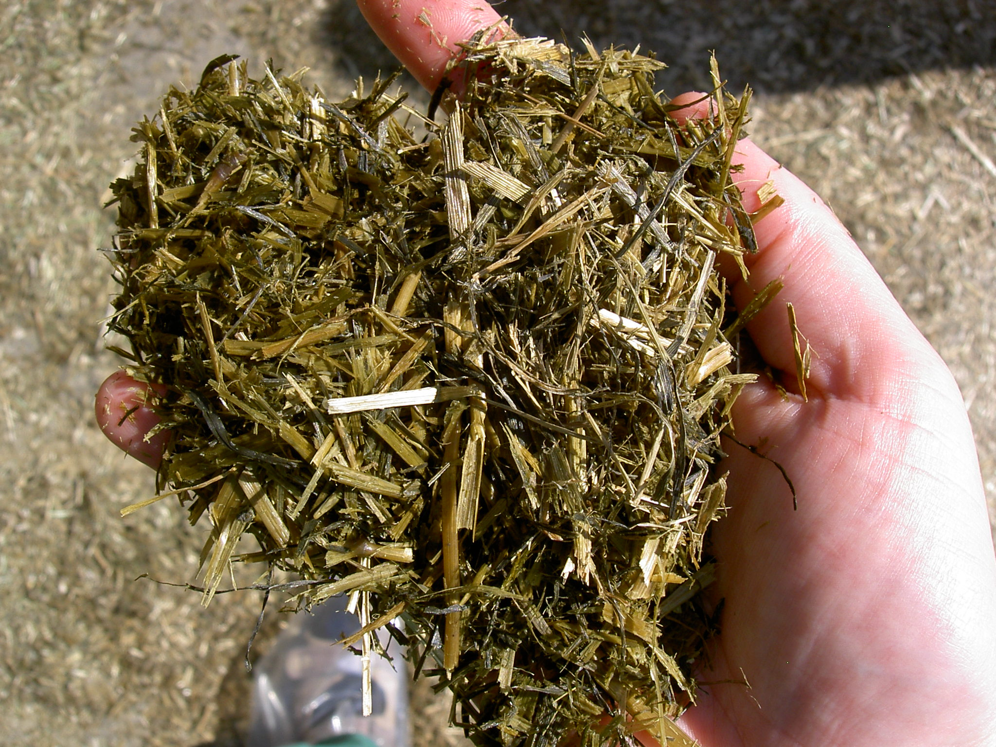 Grass silage after 8 weeks storage. The ensiling process is completed.