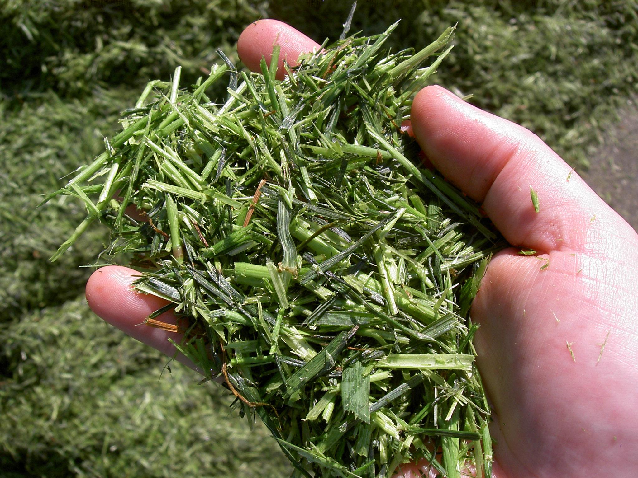 Fresh grass silage