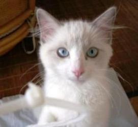 猫目になっています、瞳はブルー。海よりも大きな目。