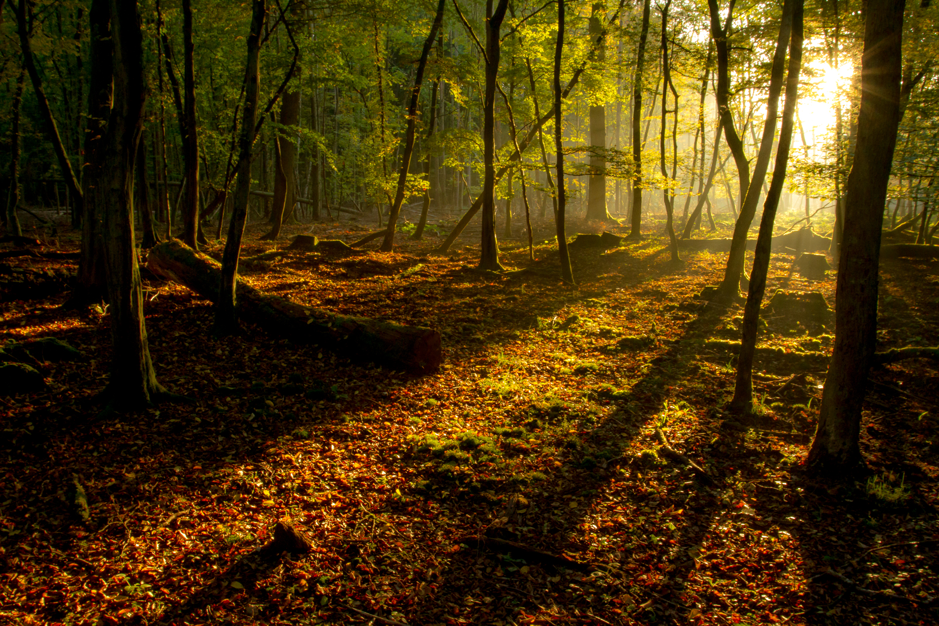 November 2017 - Herbstwald