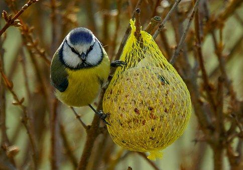 Februar 2020 - Füttern nacht auch in milden Wintern Sinn (Foto. Pixabay)