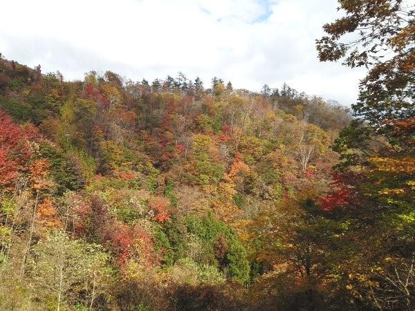 終点まで約45分ほど歩きで上がると、この辺りは広葉樹が広がっています。