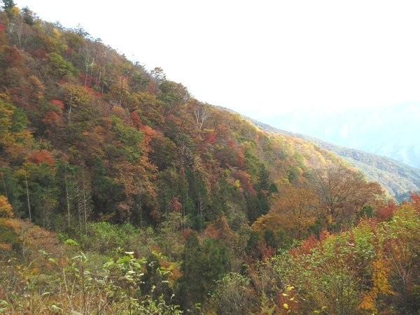 終点から谷沿いに下がったところに、杉90年生の林班があるということで下がってみました。