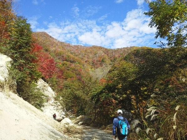 寝釈迦に向かって開設された林道寝釈迦線ですが、開通は一山手前まで。