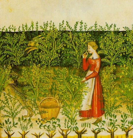 Die Klostermedizin des Mittelalters findet nach wie vor Anwendung