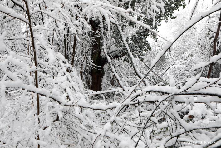 Der alte Kirschbaum im Künstlergarten