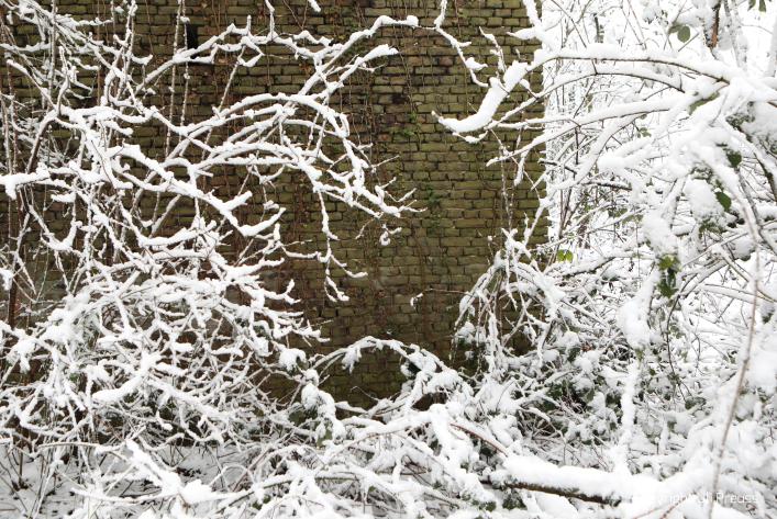 Alte Mauer im überwucherten Künstlergarten
