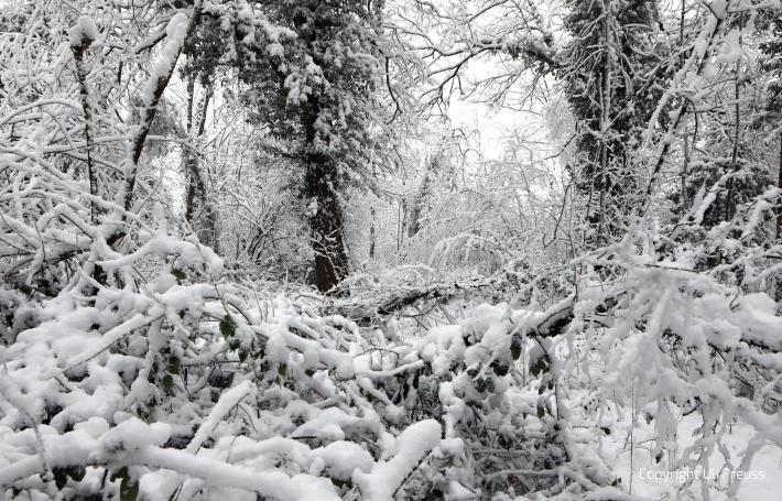 Der alte Künstlergarten der Kolonie im Schnee, Zustand Februar 2021