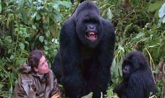 Sigourney Weaver in Gorillas in the Mist