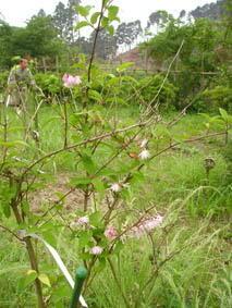 飛澤様 ウツギの花