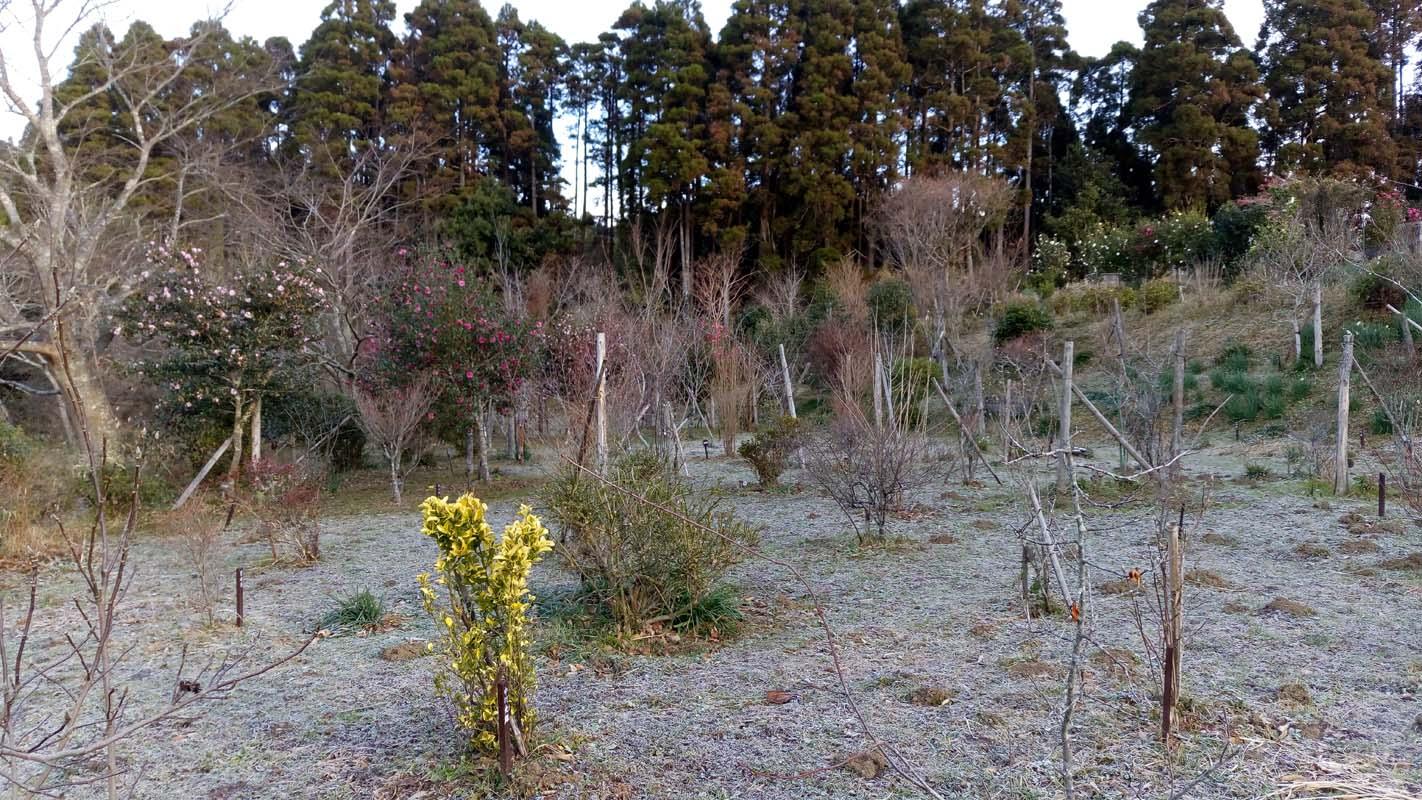 霜が降り、いよいよ冬らしい寒さになりました。第一樹木葬地