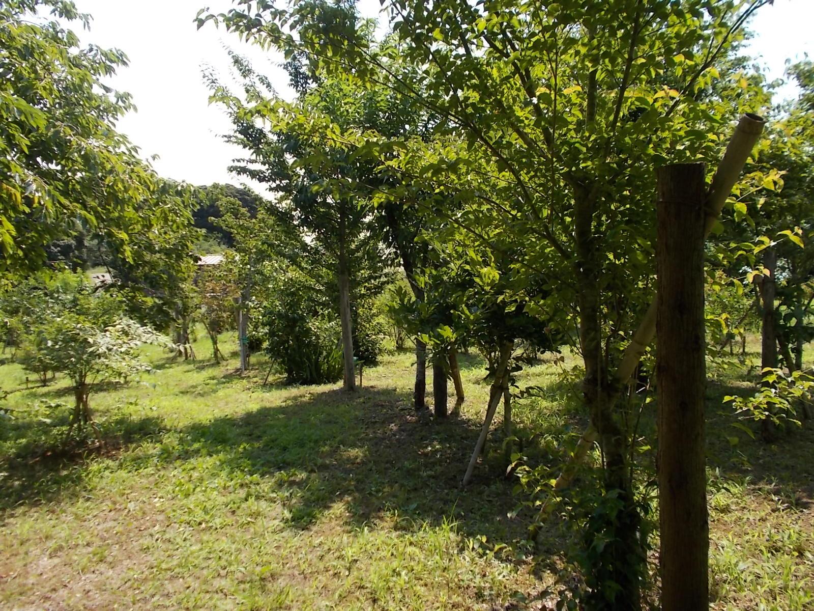 大きく育った木々に木陰が出来て、涼しく下草刈が出来るようになりました。第二樹木葬地