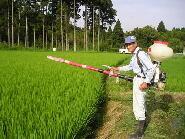 春と秋に有機肥料を撒きます。