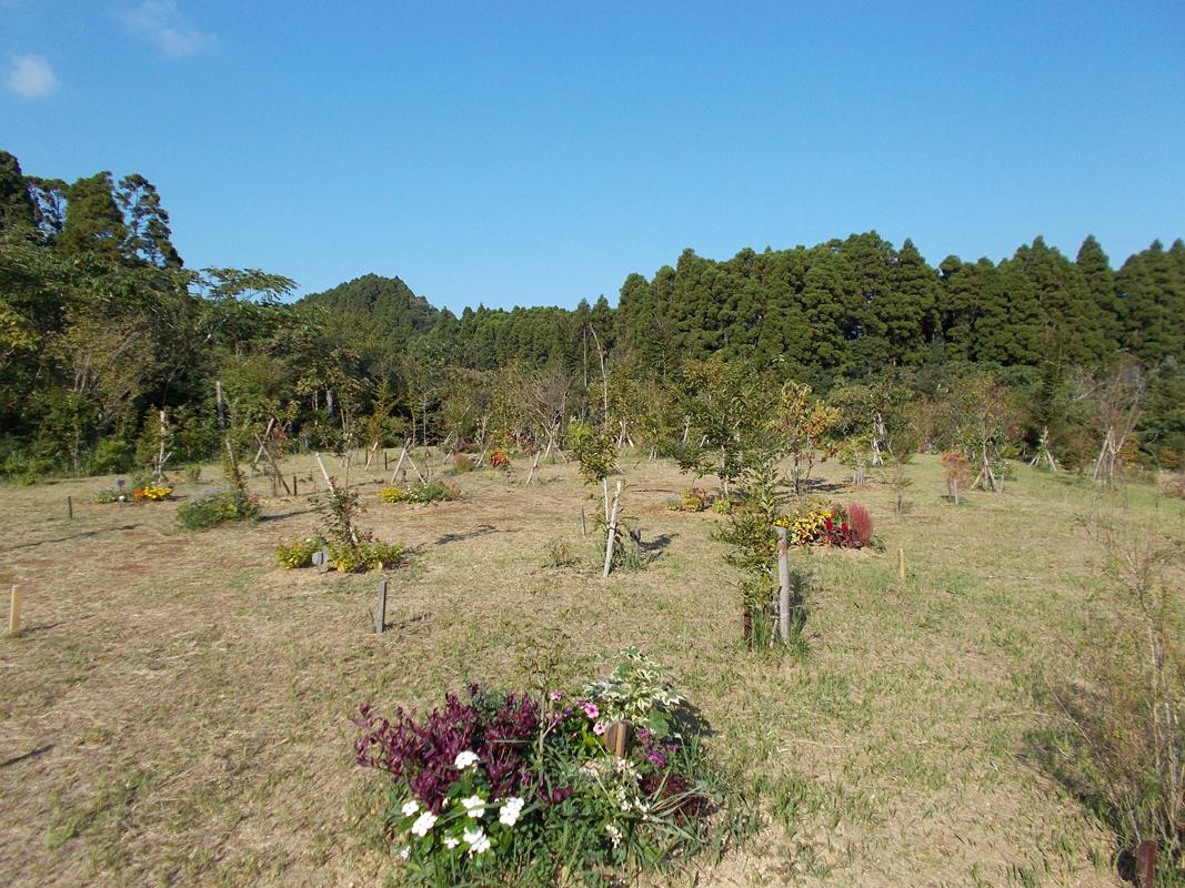 陽当たりがいいので、トンボが沢山飛び交っています。第三樹木葬地