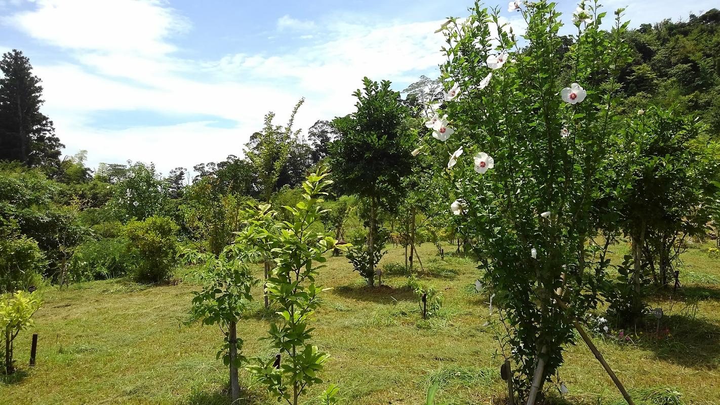ムクゲが綺麗な季節です。第三樹木葬地