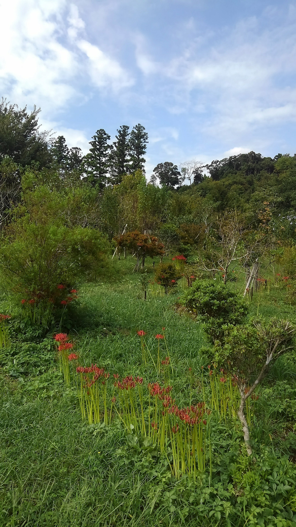 夏の花が残り、秋の花が咲き綺麗です。第二樹木葬地