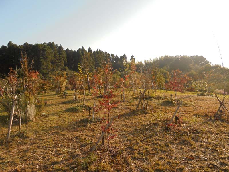 小さな木々も色づき始めました。第三樹木葬地