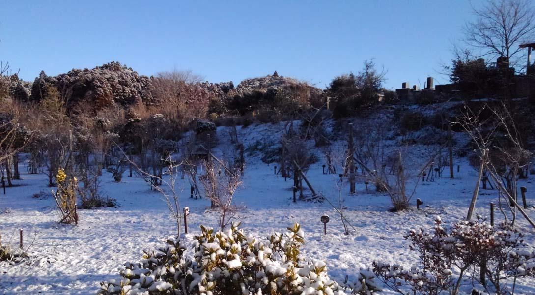 外房にも雪が積もりました。第一樹木葬地