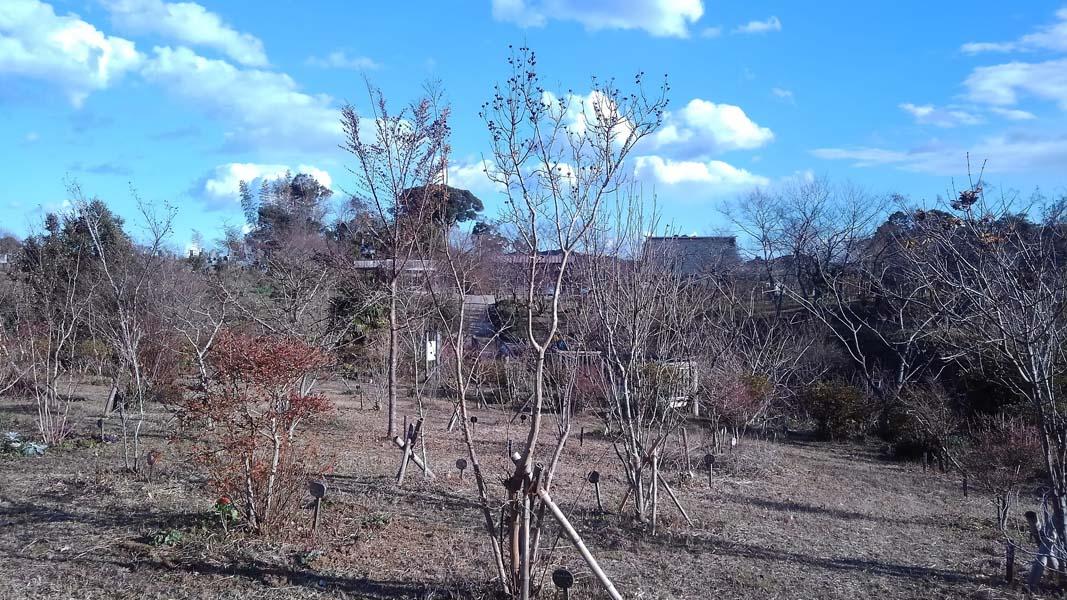冬晴れの第三樹木葬地