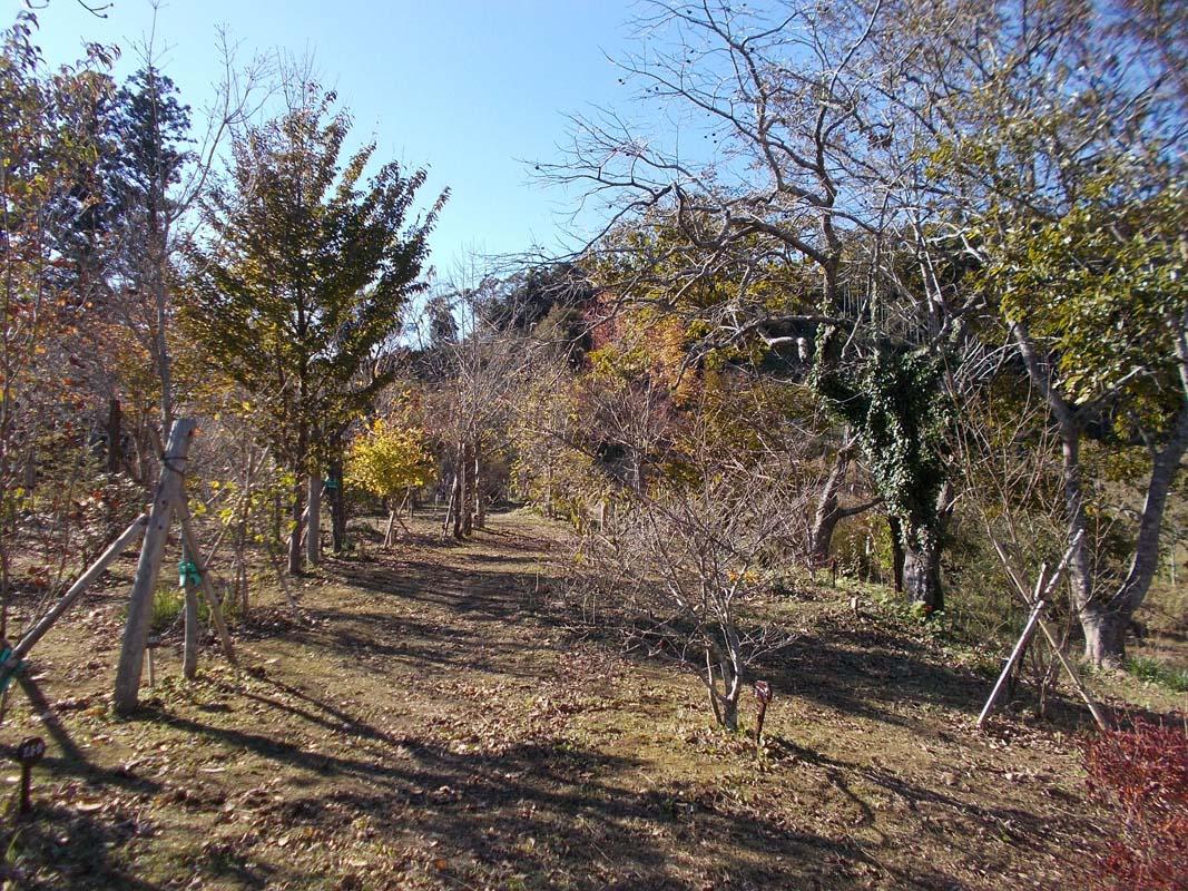 紅葉始まる第二樹木葬地