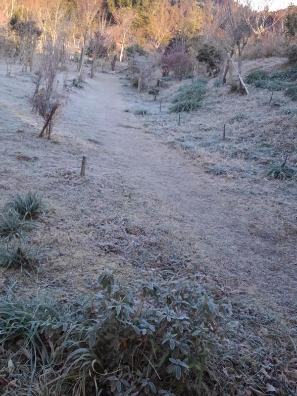 霜で凍る第一樹木葬の通路