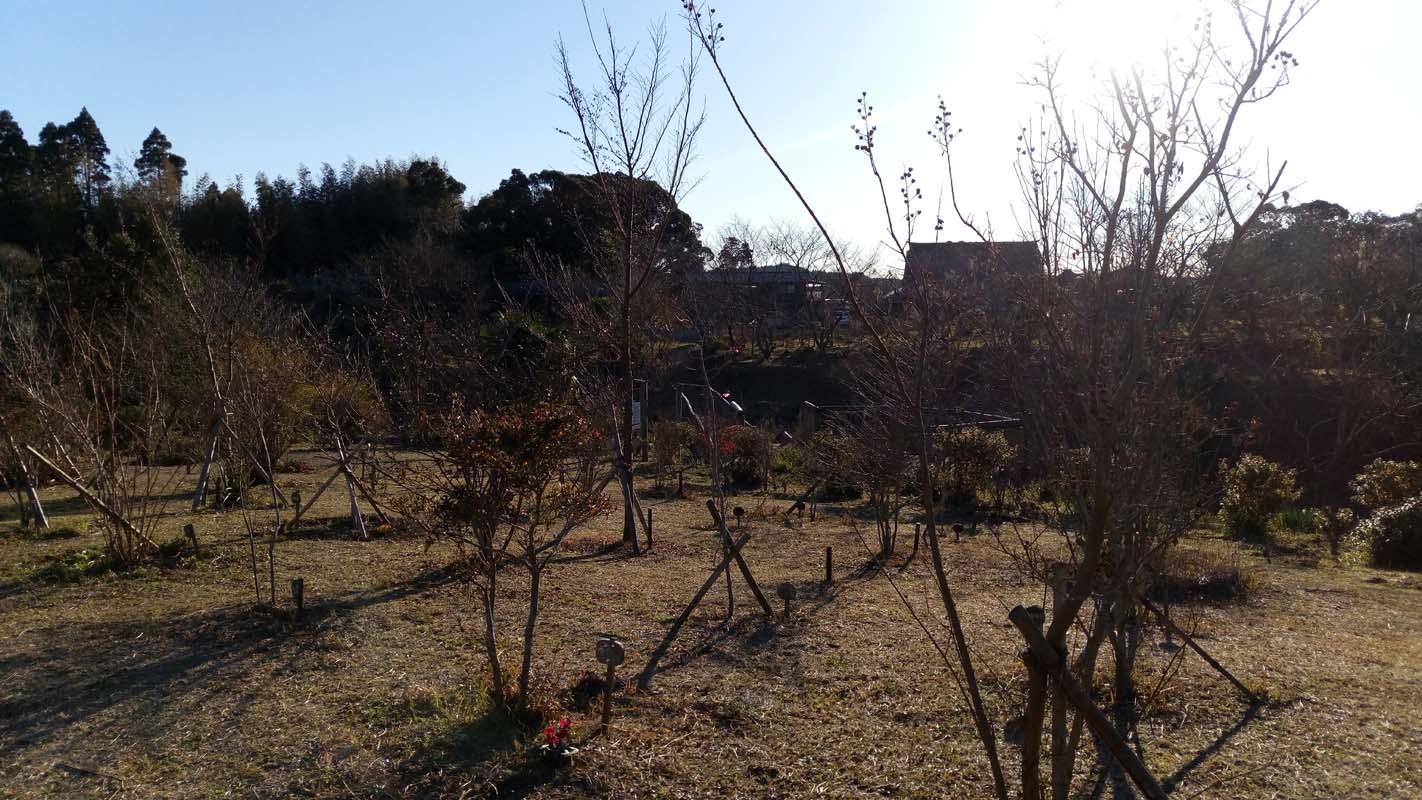 早朝の第三樹木葬地