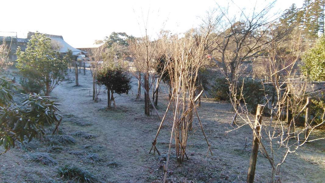 霜下りる第一樹木葬地