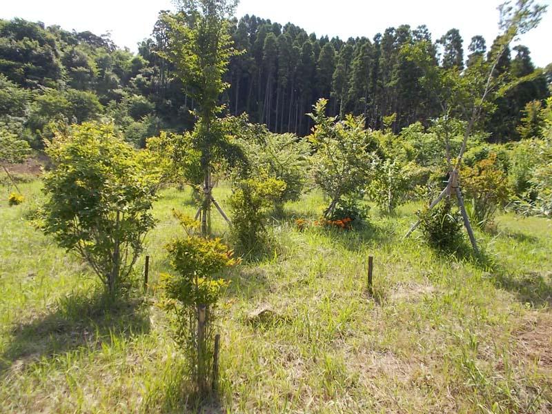梅雨の雨を受けて、木々もたくましく枝葉を広げます。第三樹木葬地